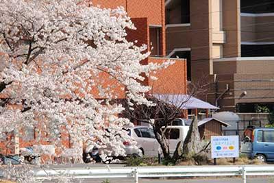 マンション外観と桜